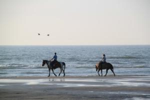 equestrian-456018_1920